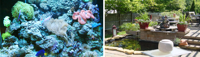 saltwater and freshwater aquariums - ponds and water gardens